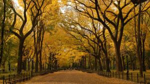 Fall in Central Park (timeout.com)